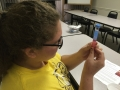 DNA extraction (12)