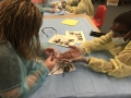 SCTC-OHCAP-Dissection-4-26-16 (22)