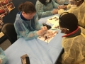 SCTC-OHCAP-Dissection-4-26-16 (29)